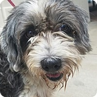 Adopt A Pet :: Bing - Aurora, CO