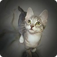 Adopt A Pet :: Zoey - New York, NY