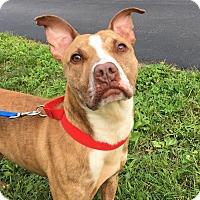 Adopt A Pet :: Liam - Lafayette, NJ