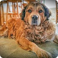 Adopt A Pet :: Bernie 720 - Naples, FL