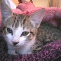 Adopt A Pet :: Keeto - Satellite Beach, FL