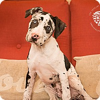 Adopt A Pet :: Bree - Inglewood, CA