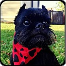 Adopt A Pet :: GYPSY ROSALEE in Bryant, AR.