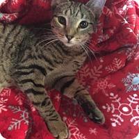 Adopt A Pet :: Garnet - Butner, NC