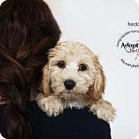 Adopt A Pet :: Freddie - Sherman Oaks, CA