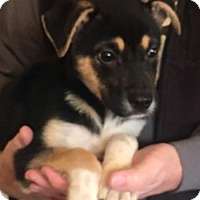 Adopt A Pet :: Lucy - Doylestown, PA