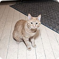 Adopt A Pet :: Kendra - Acme, PA