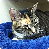 Adopt A Pet :: Hot Lips - Riverhead, NY