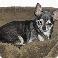 Adopt A Pet :: Allen - Orlando, FL