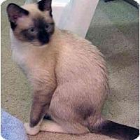 Adopt A Pet :: Chantal - Davis, CA