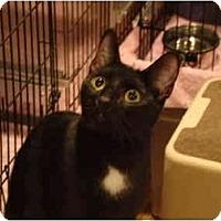 Adopt A Pet :: Midnite - Muncie, IN