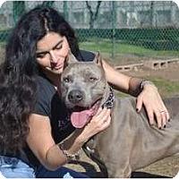 Adopt A Pet :: RHINO - Phoenix, AZ