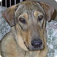 Adopt A Pet :: Cody - Golden Valley, AZ