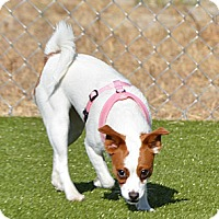 Adopt A Pet :: Buttons - Meridian, ID