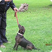 Adopt A Pet :: Felicia - Kendall, NY
