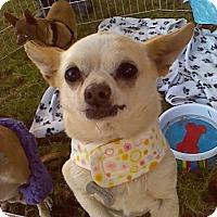 Adopt A Pet :: Harper - Creston, CA