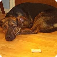 Adopt A Pet :: Sandy - Saskatoon, SK