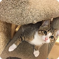 Adopt A Pet :: Meyer - McHenry, IL