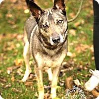 Adopt A Pet :: Rita - RESCUED! - Zanesville, OH