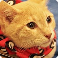 Adopt A Pet :: Sonny Boy - Duluth, GA