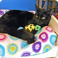 Adopt A Pet :: Leonidas Thunderpaws - Glendale, AZ