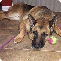 Adopt A Pet :: Bruno - rockford, IL