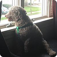 Adopt A Pet :: Memphis - Alden, NY