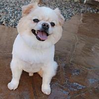 Adopt A Pet :: ZinnaZu - El Segundo, CA