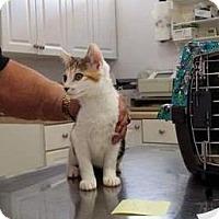Adopt A Pet :: Carol - Putnam, CT