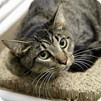 Adopt A Pet :: Puttin' on the Ritz - Kettering, OH