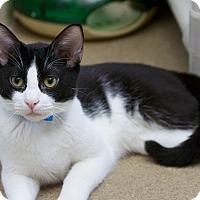 Adopt A Pet :: Bernard - Chula Vista, CA