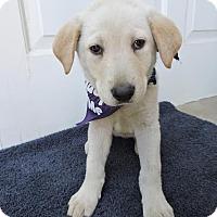 Adopt A Pet :: Tawny-Pending! - Detroit, MI