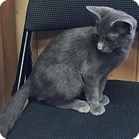 Adopt A Pet :: Chloe - Covington, VA