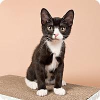 Adopt A Pet :: Shindig - Wilmington, DE