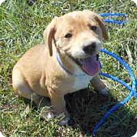 Adopt A Pet :: Bubblicious - Allentown, NJ