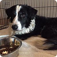 Adopt A Pet :: Pimiento - Tempe, AZ