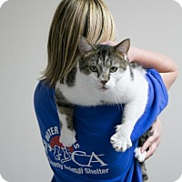 Domestic Shorthair Cat for adoption in Manteo, North Carolina - Noir