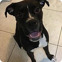 Adopt A Pet :: Karibu - Hurst, TX
