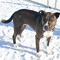 Adopt A Pet :: Zuko - Gardnerville, NV