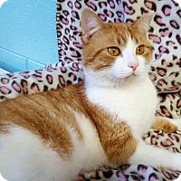 Adopt A Pet :: Jase 25949 - Prattville, AL