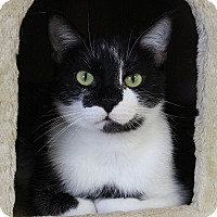 Adopt A Pet :: Blitzen - Bradenton, FL