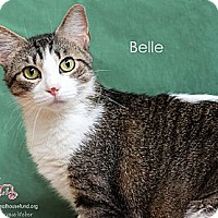 Adopt A Pet :: Belle - St Louis, MO