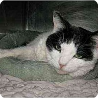 Adopt A Pet :: Princess - Lunenburg, MA