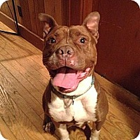 Adopt A Pet :: Sally - Hillsborough, NJ