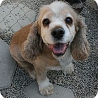 Adopt A Pet :: Princess - Canoga Park, CA
