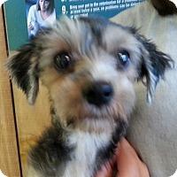 Adopt A Pet :: Carter - Orlando, FL