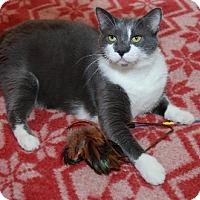 Adopt A Pet :: Boots - Alexandria, VA