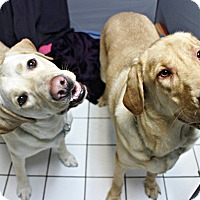 Adopt A Pet :: Shamus & Finnegan - Forked River, NJ