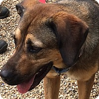 Adopt A Pet :: Lettie - Grafton, MA