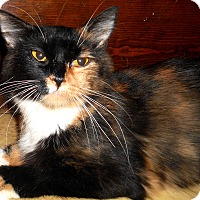Adopt A Pet :: Sabine - Chattanooga, TN